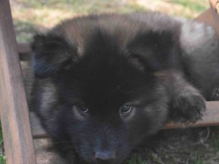 Bea, 8 Wochen
