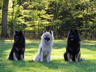 Agnes, Abby Und Ascan
